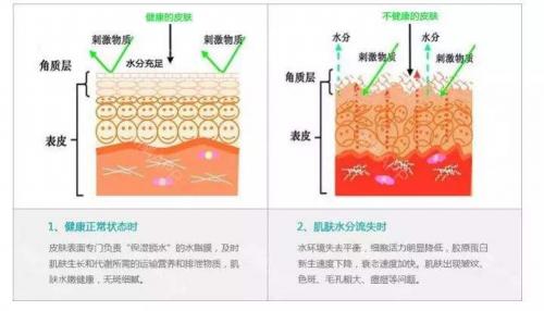 自愈力焕肤,重建皮肤屏障,快速恢复月光肌,快速解决所有肌肤难题!